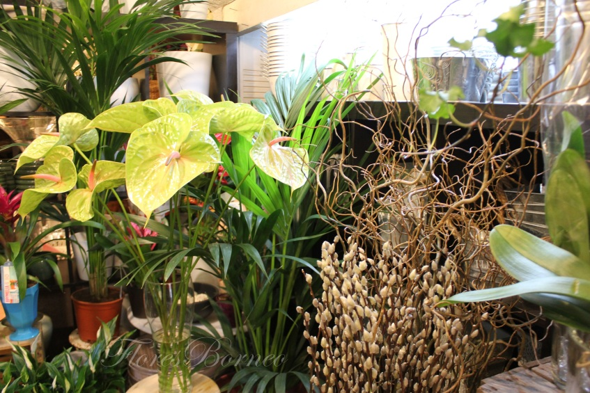 floresborneo-centro-de-flores-en-palma-de-mallorca-floristeria-borneo-boda
